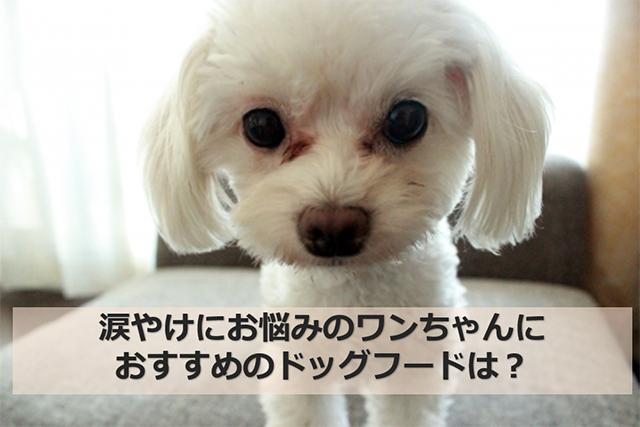 涙やけの犬_640×427