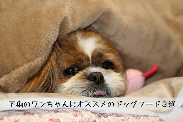 下痢で辛そうな犬