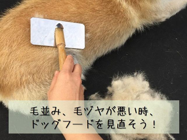 犬のブラッシング